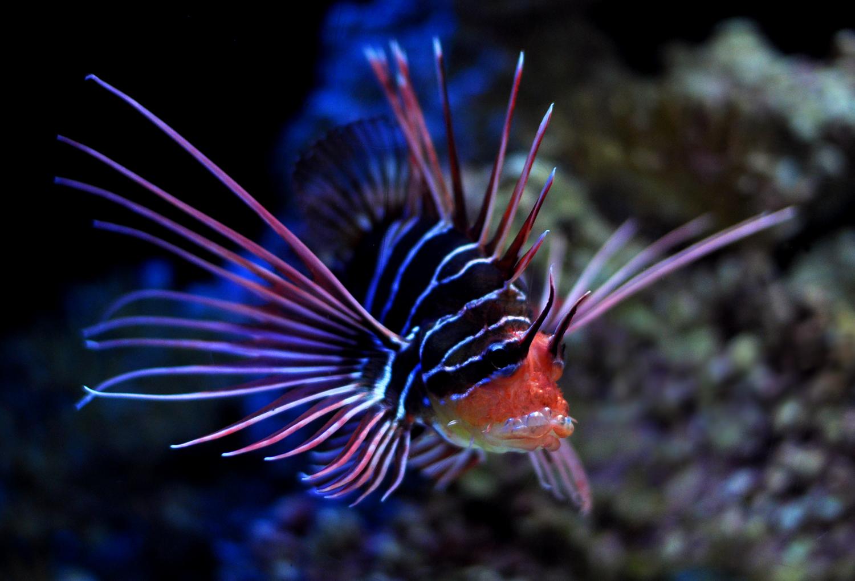 It's Animal Tuesday – Dragonfish   Tokyobling's Blog