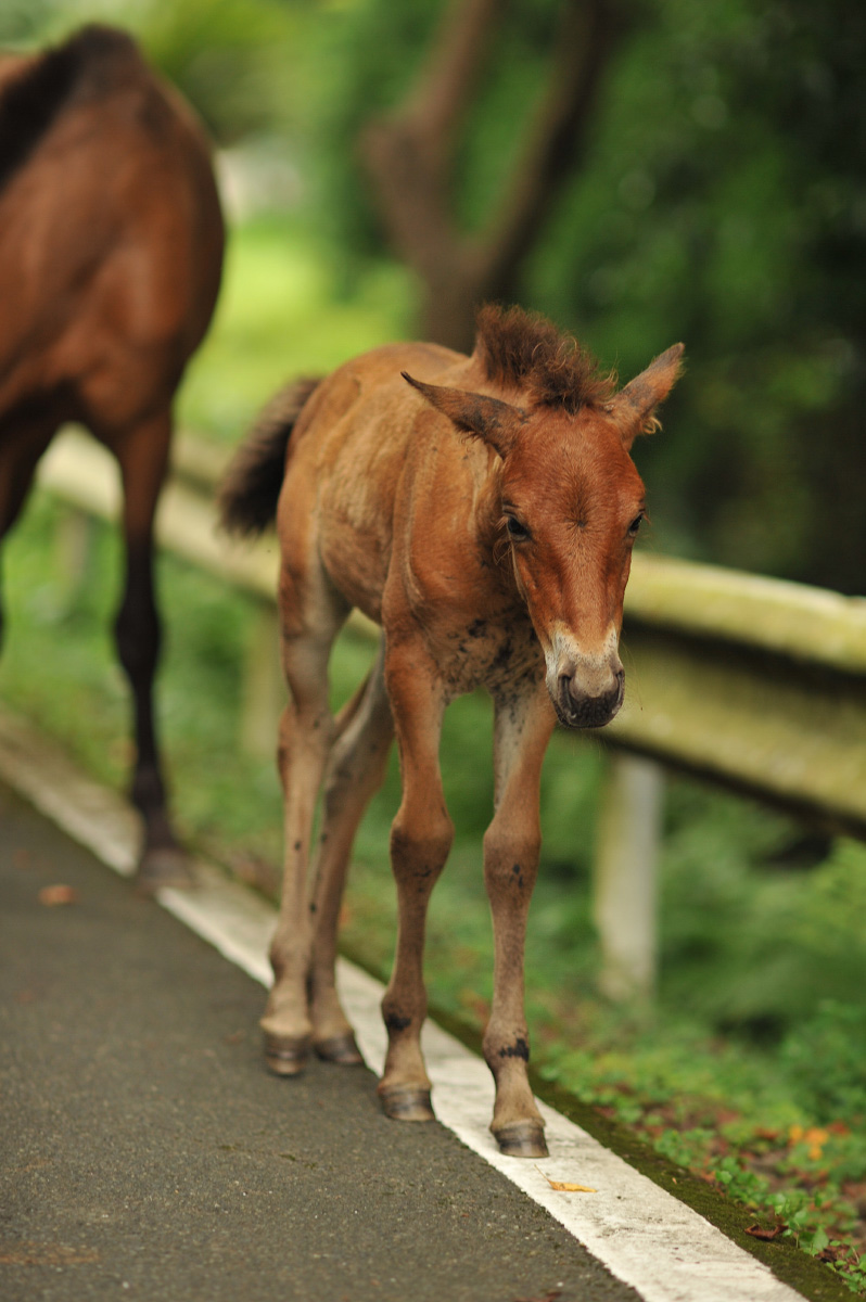 The Wild Horses of Miyazaki | Tokyobling's Blog