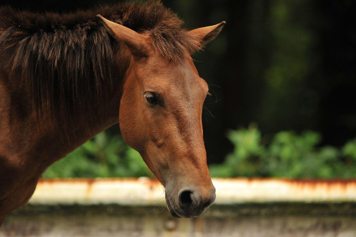 More Miyazaki Wild Horses   Tokyobling's Blog