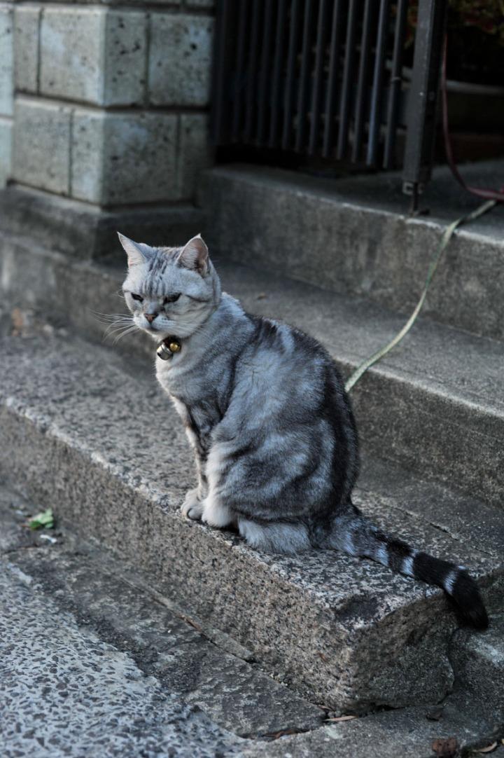 nara_cat_7274