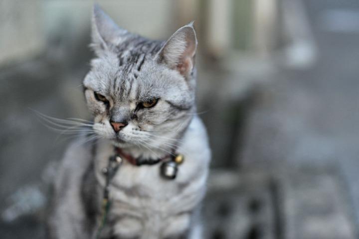 nara_cat_7287