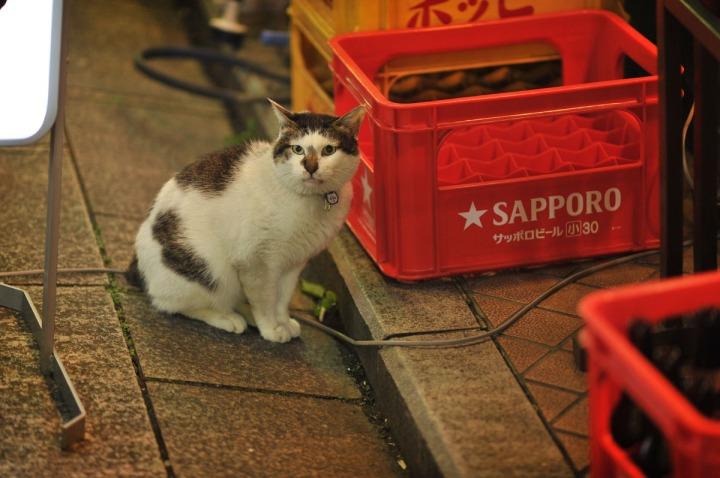 asakusa_evening_4802