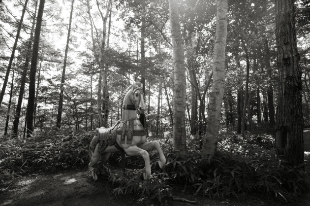 fairytale_forest_bw_2846
