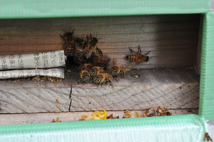 ginpachi_project_beekeeping_7112