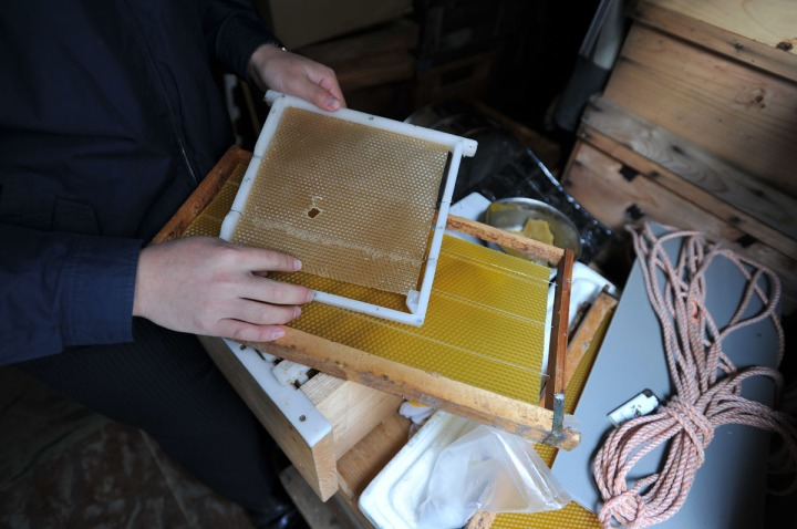 ginpachi_project_beekeeping_7159