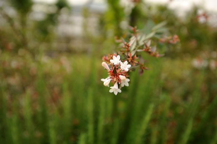 mitsukoshi_roof_garden_ginza_8326