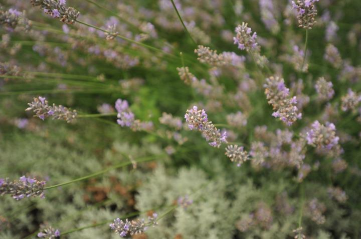 mitsukoshi_roof_garden_ginza_8329
