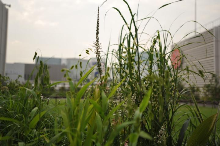 mitsukoshi_roof_garden_ginza_8350