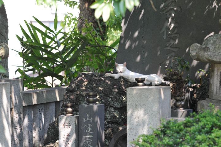 numazu_cemetery_cat_3449