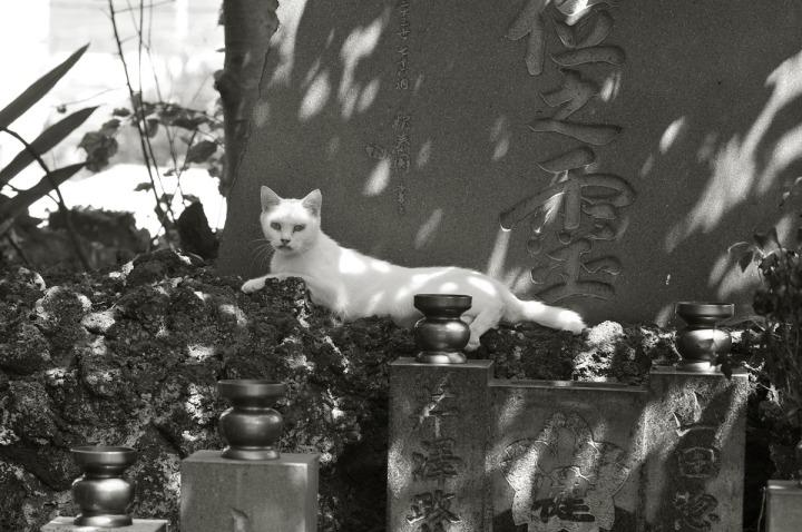 numazu_cemetery_cat_3465