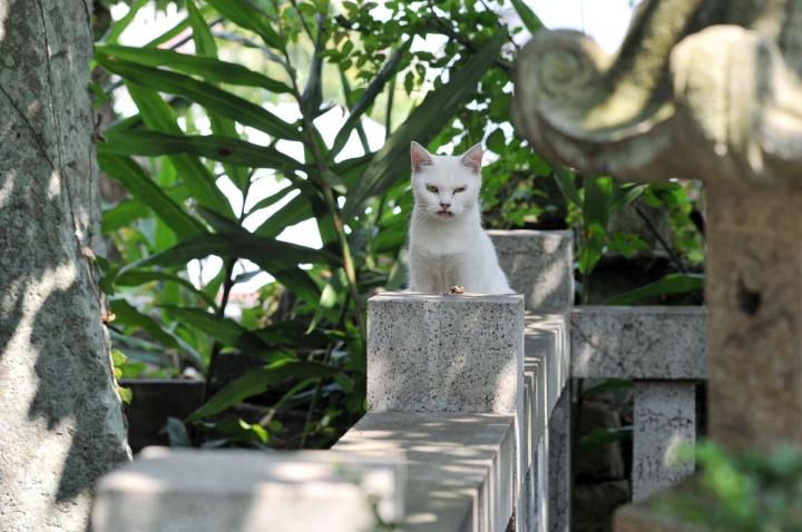 numazu_cemetery_cat_3483