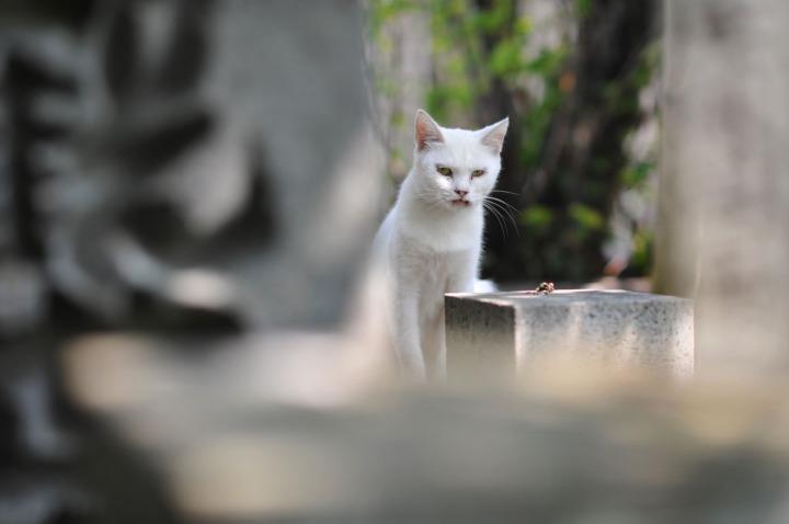 numazu_cemetery_cat_3543