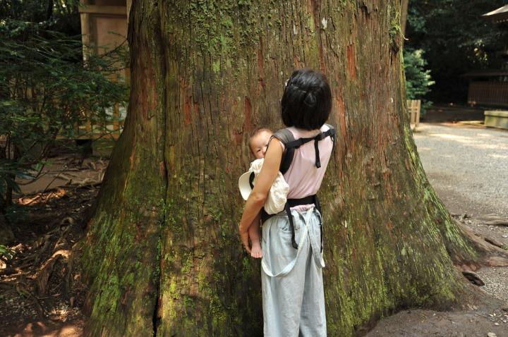 sacred_tree_6810