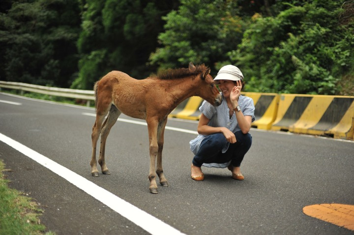 wildhorses_miyazaki_4621