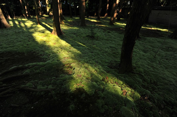 mud_and_moss_toshodaiji_nara_7121