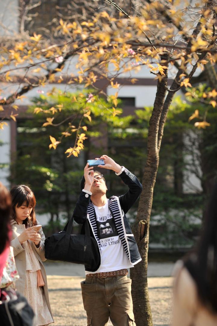 yasukuni_shrine_cherry_blossoms_countdown_1750