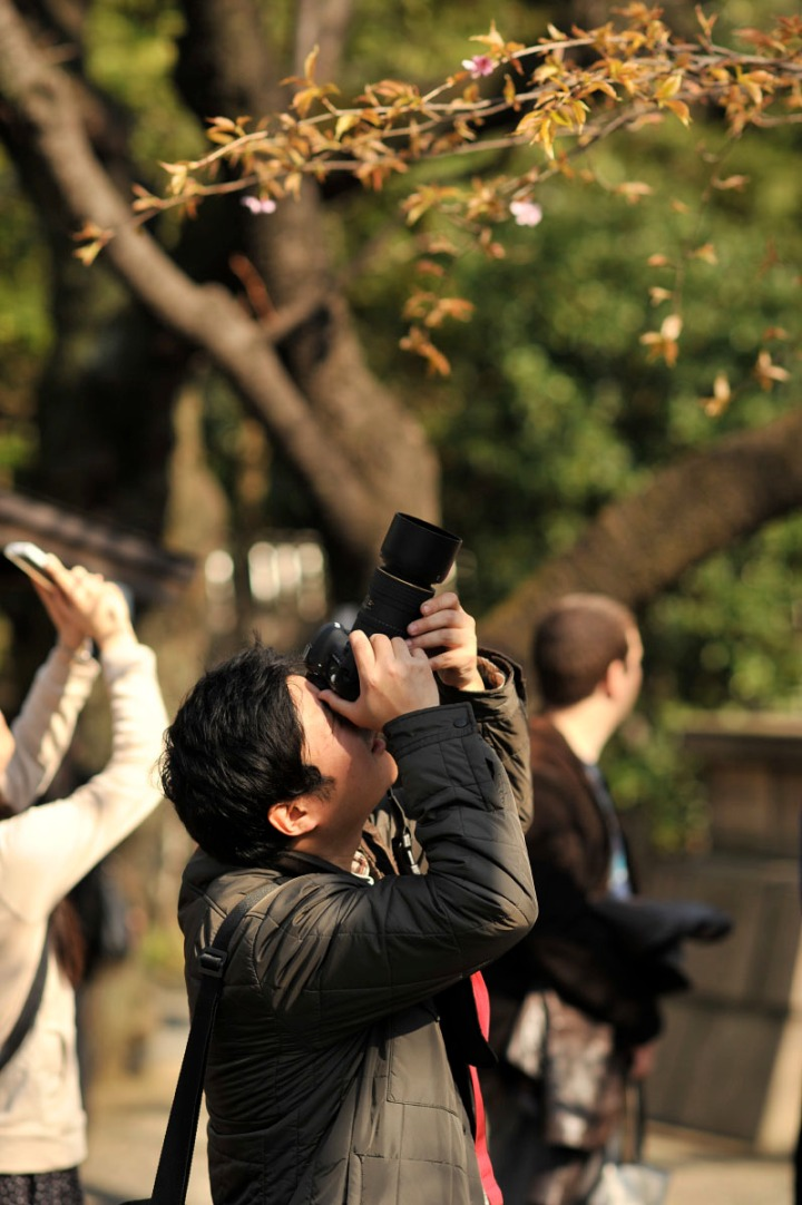 yasukuni_shrine_cherry_blossoms_countdown_1754