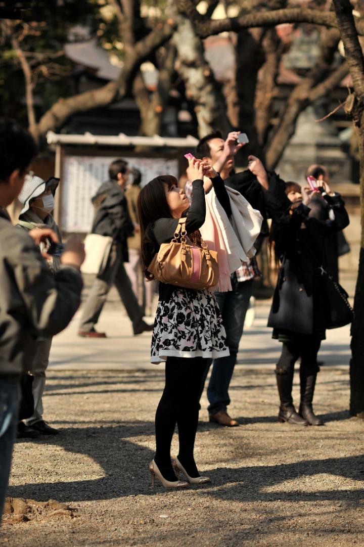 yasukuni_shrine_cherry_blossoms_countdown_1769