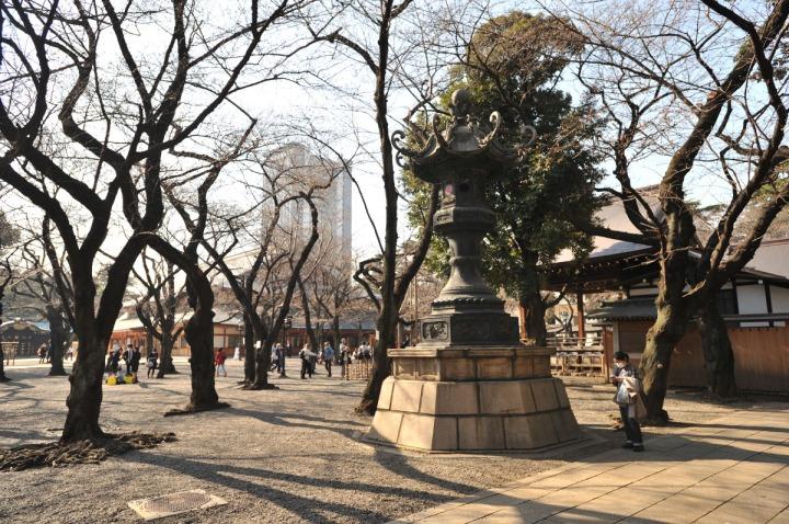 yasukuni_shrine_cherry_blossoms_countdown_1807