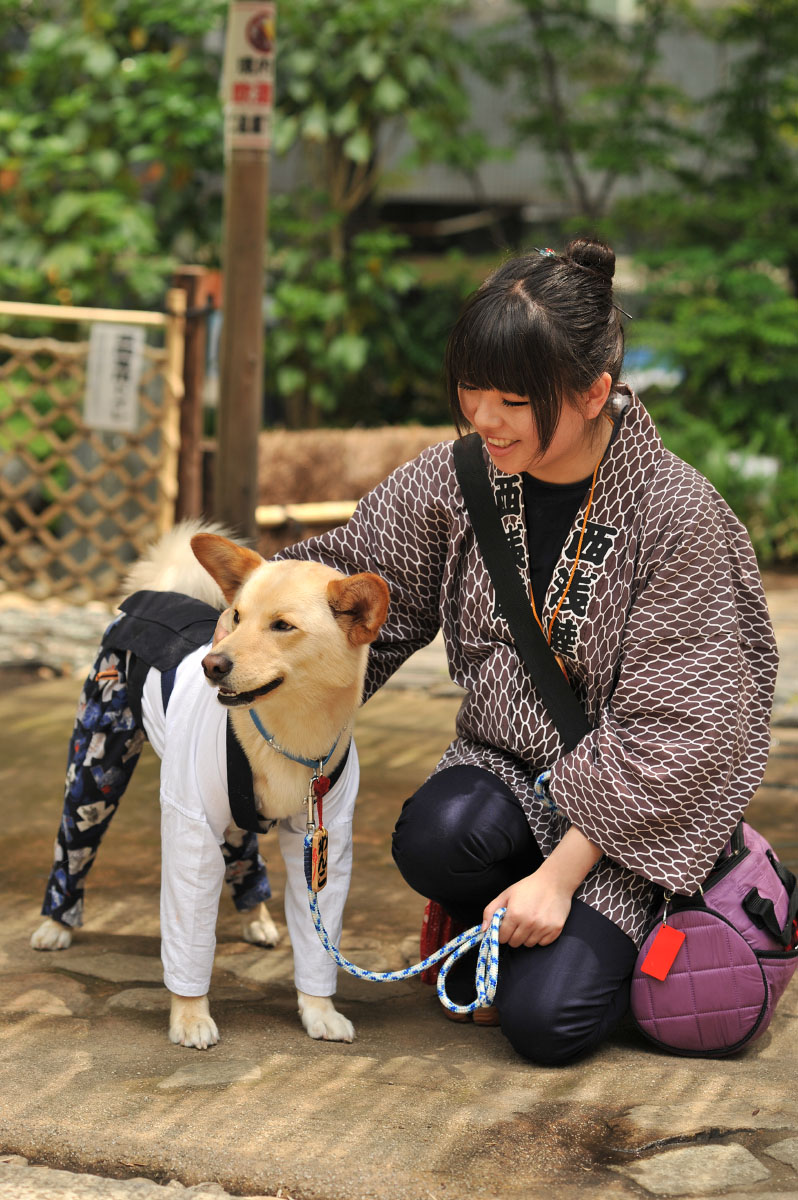 festival_dog_sanja_matsuri_asakusa_3655