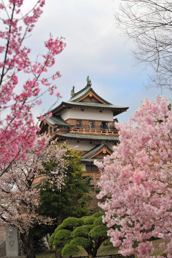 takashima_castle_suwa_cherryblossom_4848