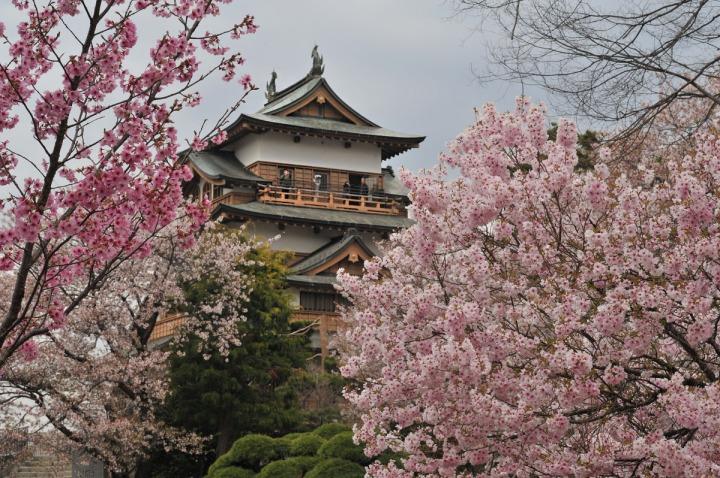 takashima_castle_suwa_cherryblossom_4862
