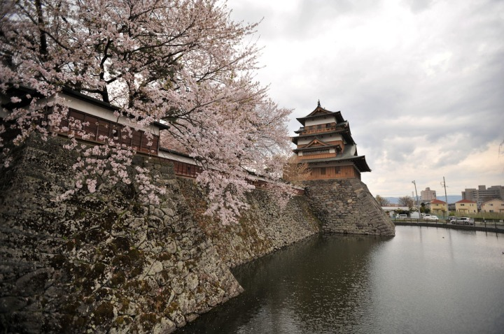takashima_castle_suwa_cherryblossom_4947