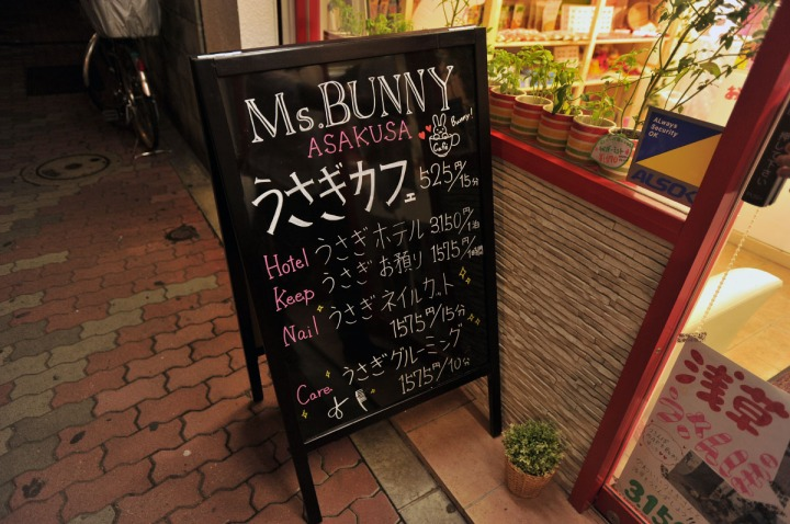 msbunny_usagi_cafe_asakusa_4445