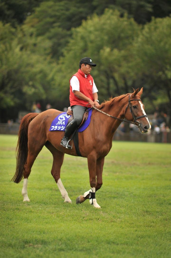 horse_day_bajikouen_3807