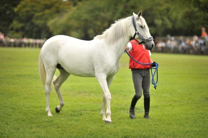 horse_day_bajikouen_3841