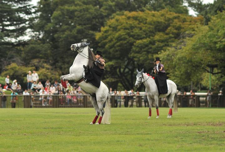 horse_day_bajikouen_3875