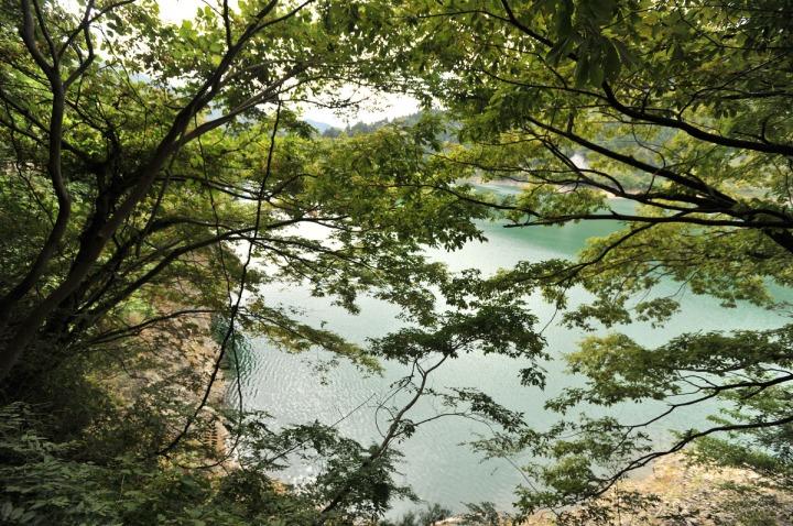 lake_okutama_forest_5667