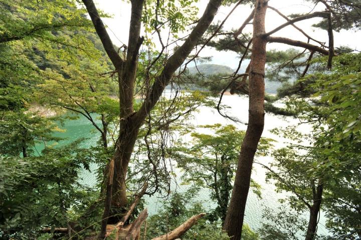 lake_okutama_forest_5672