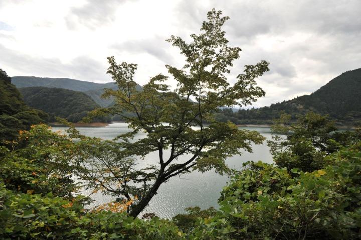 lake_okutama_forest_5688