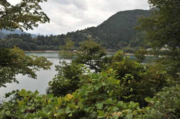 lake_okutama_forest_5689