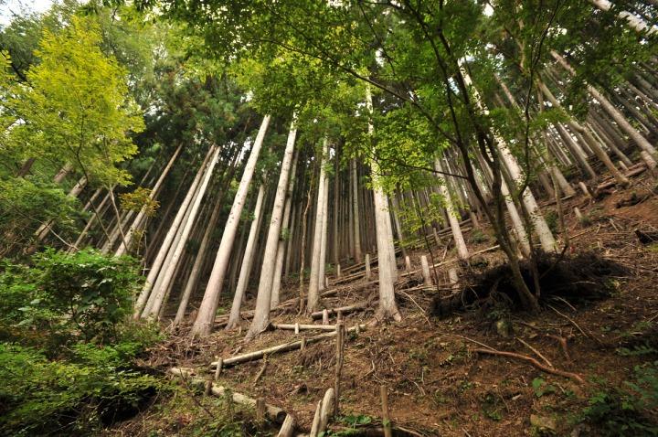 lake_okutama_forest_5695