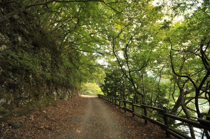 lake_okutama_forest_5724