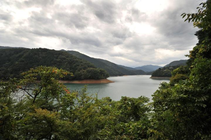 lake_okutama_forest_5726
