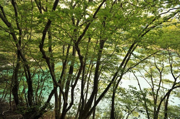 lake_okutama_forest_5730