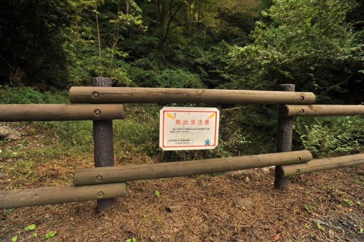 lake_okutama_forest_5732