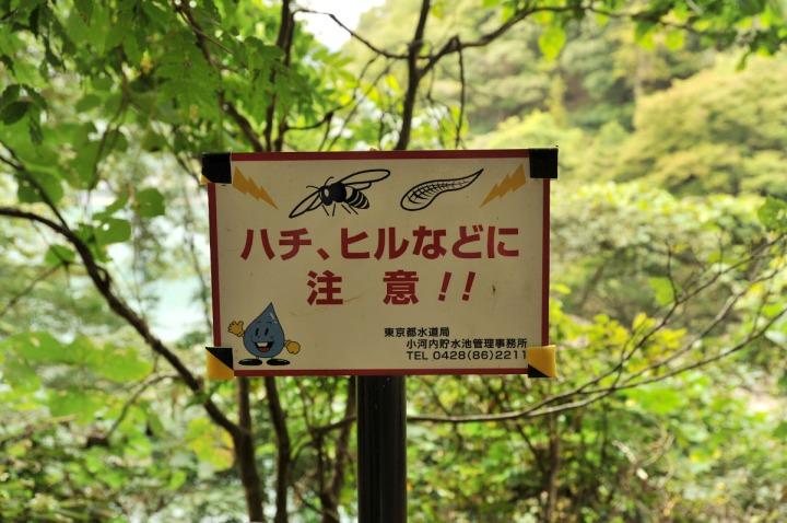 lake_okutama_forest_5733