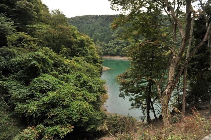 lake_okutama_forest_5746