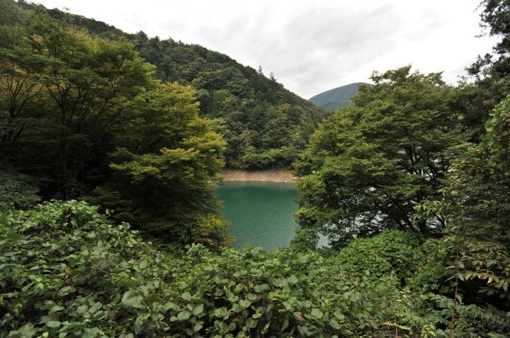 lake_okutama_forest_5752