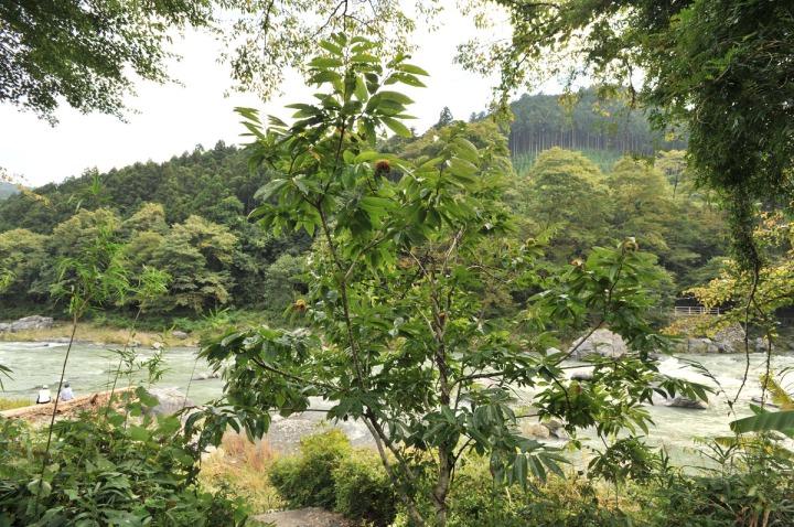 tamagawa_river_walk_sawai_3102