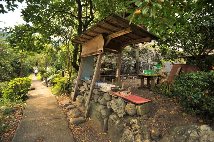 tamagawa_river_walk_sawai_3123