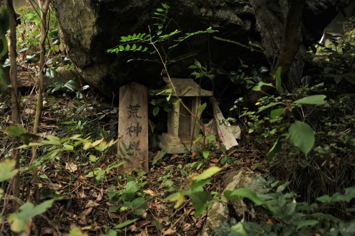tamagawa_river_walk_sawai_3136