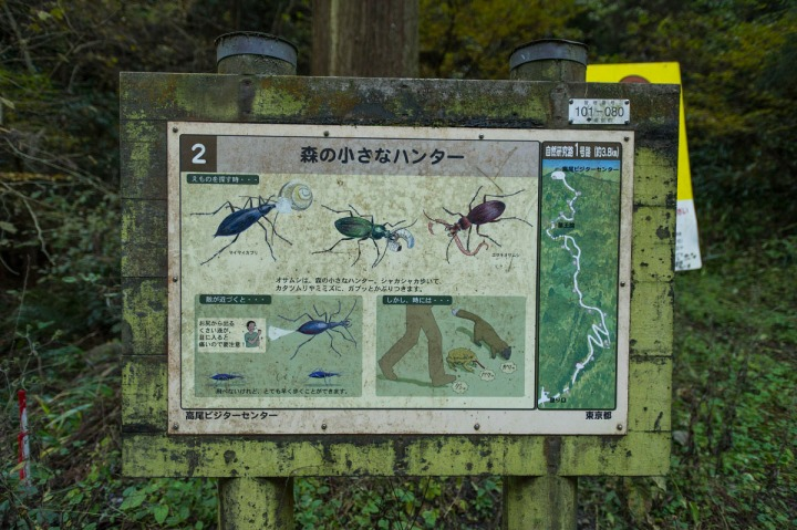 takaosan_forest_insect_sign_8408