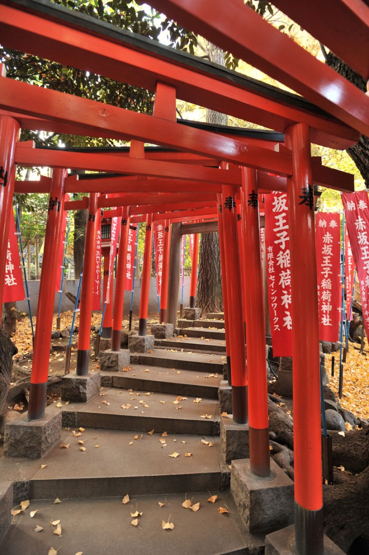 nogi_shrine_nogizaka_1626