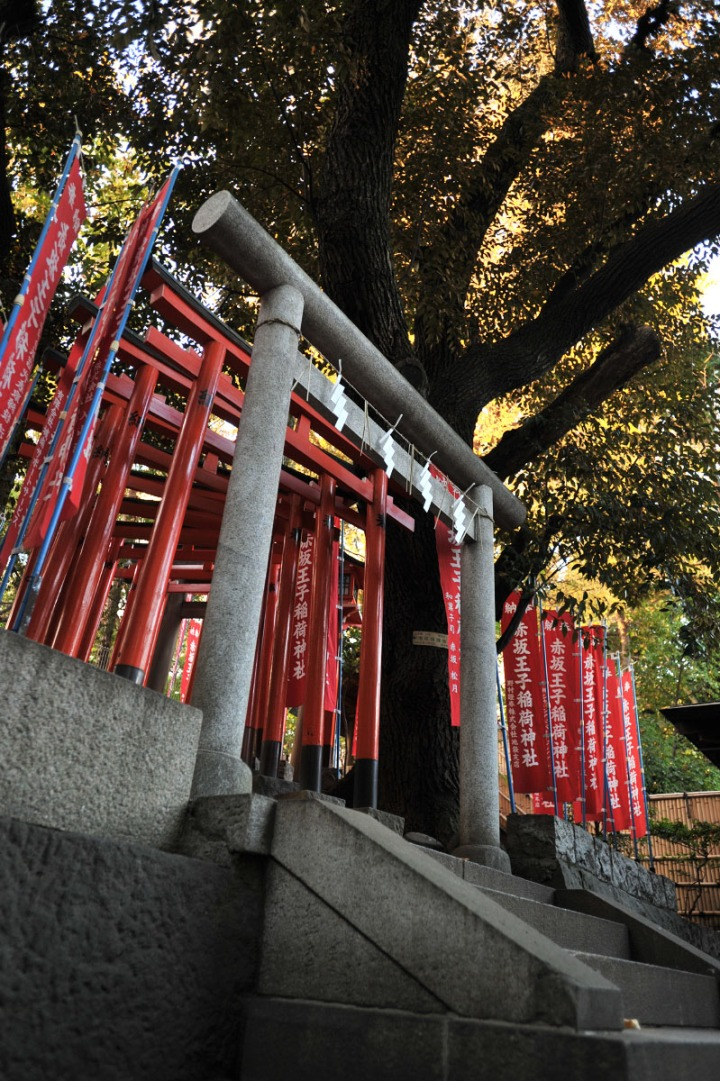 nogi_shrine_nogizaka_1694