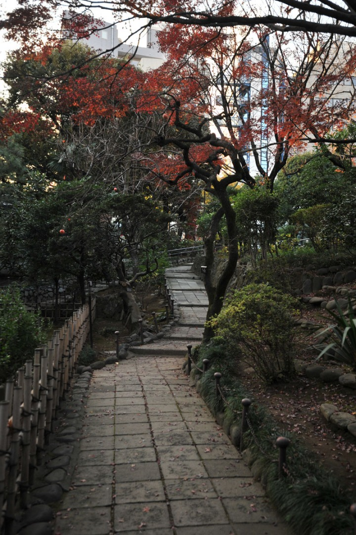 nogi_shrine_nogizaka_1709